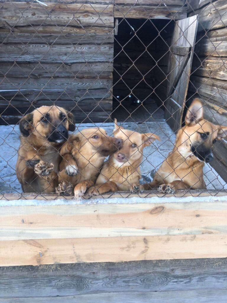 Представники  «Лукас» відвідали притулок бездомних тварин «Сіріус»